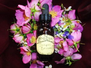 Juniper Berry tincture, taken in small amounts for a limited time, can help cleanse the kidneys and bladder