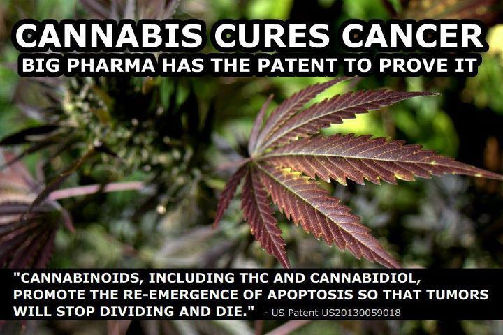 Cannabis-Cancer-patent